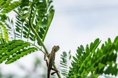 Lizard on the tree in green nature Royalty Free Stock Photos