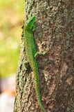Lizard on the tree Stock Images