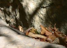 Lizard on tree trunk royalty free stock photos