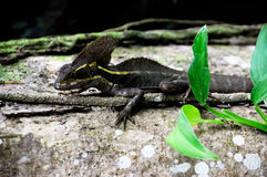 Lizard on a tree trunk with green leaves Stock Photography