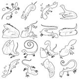 Lizard type animals icons set, outline style. Lizard type animals icons set. Outline illustration of 16 lizard type animals vector icons for web Royalty Free Illustration