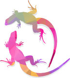 Lizard Vector art multicolored polygonal illustration Royalty Free Stock Photography