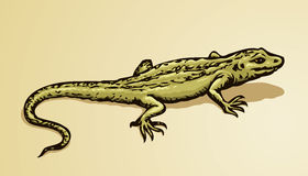Lizard. Vector drawing Stock Images