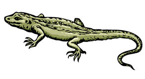 Lizard. Vector drawing Royalty Free Stock Image