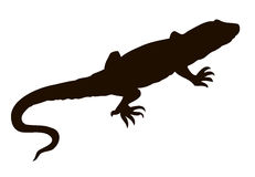 Lizard. Vector drawing Stock Photos