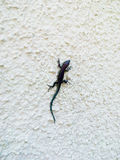 The lizard on the wall Royalty Free Stock Photos