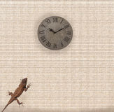 Lizard on the wall Royalty Free Stock Photo