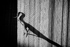 Lizard on wall with copy space royalty free stock photos