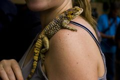 Lizard on a woman shoulder close up photography stock photo