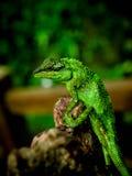 Lizard1 Royaltyfri Foto