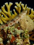 Lizardfish Stock Images
