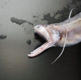 Lizardfish Fotos de archivo libres de regalías