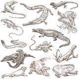 Lizards - An hand drawn pack, freehands Royalty Free Stock Photography