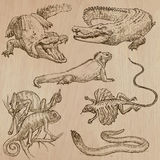 Lizards - An hand drawn vector pack Royalty Free Stock Photo