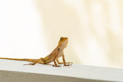 Lizards in well. Close up Royalty Free Stock Photography
