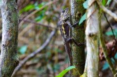 Lizzard auf einem Baum Stockfotografie