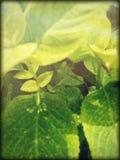 lizzard en arbusto fotografía de archivo libre de regalías