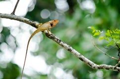 Lizzard on the tree Stock Photo