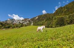 Ljubelj山口,自然,斯洛文尼亚 免版税库存图片