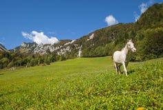 Ljubelj bergpasserande, natur, Slovenien Royaltyfri Bild