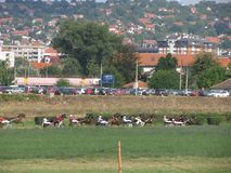 Ljubicevo骑马者比赛 图库摄影