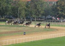 Ljubicevo骑马者比赛 库存图片
