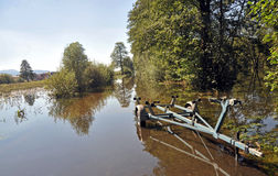 Ljubljana-Sumpf Stockbilder