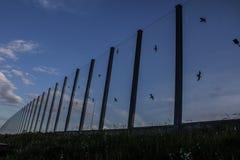 Ljud-absorberande glass skärm längs vägen i centret Svartkonturer av fåglar på exponeringsglaset Bakgrund Arkivfoton