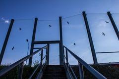 Ljud-absorberande glass skärm längs vägen i centret Svartkonturer av fåglar på exponeringsglaset Bakgrund Arkivfoto