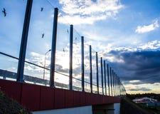 Ljud-absorberande glass skärm längs vägen i centret Svartkonturer av fåglar på exponeringsglaset Bakgrund Arkivbild
