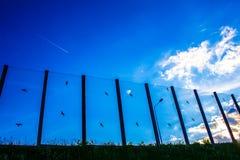 Ljud-absorberande glass skärm längs vägen i centret Svartkonturer av fåglar på exponeringsglaset Bakgrund Royaltyfria Bilder