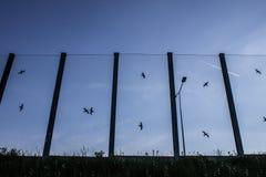 Ljud-absorberande glass skärm längs vägen i centret Svartkonturer av fåglar på exponeringsglaset Bakgrund Royaltyfri Foto