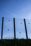 Ljud-absorberande glass skärm längs vägen i centret Svartkonturer av fåglar på exponeringsglaset Bakgrund Fotografering för Bildbyråer