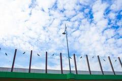 Ljud-absorberande glass skärm längs vägen i mitten av staden Svartkonturer av fåglar på exponeringsglaset Bakgrund textur Royaltyfri Bild