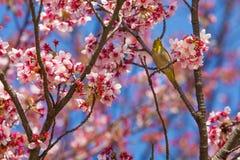 Ljudet av våren Arkivbild