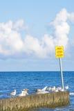 Ljumske i Östersjön Royaltyfri Bild