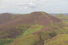 Ljung i Pentland kullar near Edinburg, Skottland Arkivfoton
