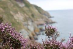 Ljung - Irland Fotografering för Bildbyråer