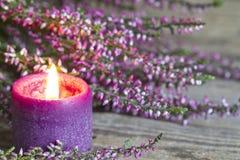 Ljung på blom- bakgrund för träbrädeabstrakt begrepp Royaltyfri Foto