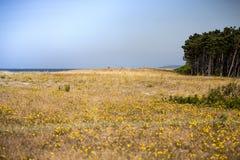 Ljunglandskap fotografering för bildbyråer