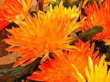 Ljus abstrakt bakgrund av kronblad och blommor av aster Arkivfoto