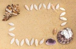 Ljus bakgrund med olika havsskal Fotografering för Bildbyråer
