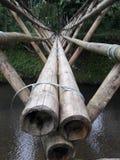 ljus bambu Arkivfoto