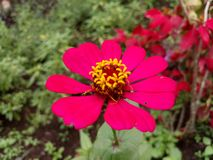 ljus blomma Arkivfoto
