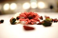 Ljus blomma Royaltyfri Fotografi