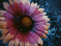 ljus blomma Royaltyfria Foton