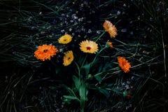ljus blomma Royaltyfri Foto