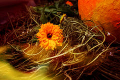 ljus blomma Arkivfoton
