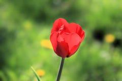 Ljus blomma och en sådan olik bakgrund arkivbild