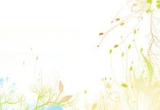ljus blommafjäder för bakgrund Royaltyfria Foton